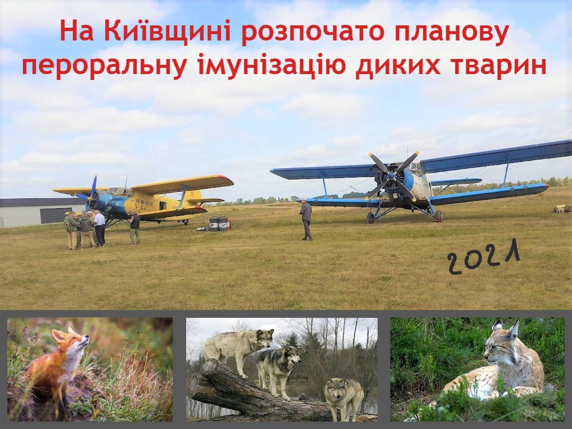 На Київщині з 13 вересня 2021 року розпочато осінню кампанію з пероральної імунізації диких тварин